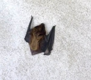 The Bat - Taken by KM